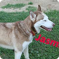 Adopt A Pet :: Jasmine - Brazil, IN