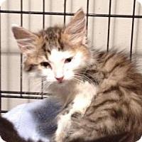 Adopt A Pet :: Rachel - East Hanover, NJ
