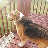 Adopt A Pet :: Reno - Elk River, MN