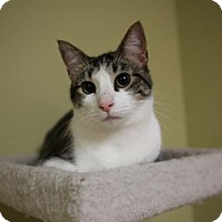 Adopt A Pet :: Clarence - Olive Branch, MS