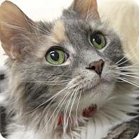 Adopt A Pet :: PEACHES - Clayton, NJ