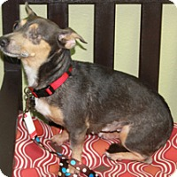Adopt A Pet :: Carly - Norwalk, CT
