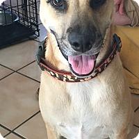 Adopt A Pet :: Tex - West Hartford, CT
