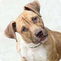 Adopt A Pet :: Peabody - Yukon, OK
