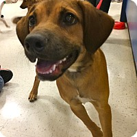 Adopt A Pet :: Karol in CT - Manchester, CT
