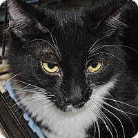 Adopt A Pet :: Peter - La Canada Flintridge, CA