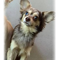 Adopt A Pet :: Timmy - Grass Valley, CA