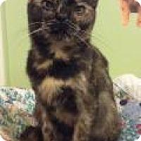 Adopt A Pet :: Fawna - Breinigsville, PA