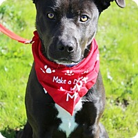Adopt A Pet :: Margo - Grants Pass, OR