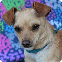 Adopt A Pet :: Tango:Low fee-Neutered/Chipped - Red Bluff, CA