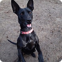 Adopt A Pet :: Cleo - Ravenel, SC