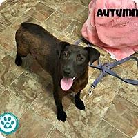 Adopt A Pet :: Autumn - Kimberton, PA
