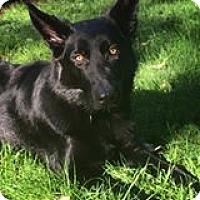 Adopt A Pet :: River - Mill Creek, WA