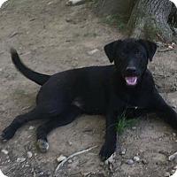 Adopt A Pet :: Ranger - Rochester, NY