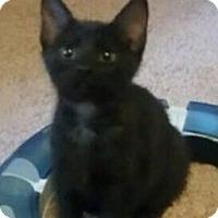 Adopt A Pet :: Storm - Gainesville, FL