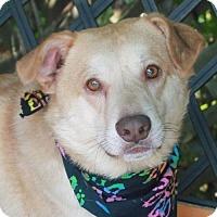 Adopt A Pet :: Maverick - Garfield Heights, OH