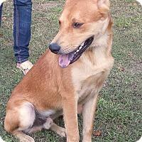 Adopt A Pet :: Maui (fostered in Louisiana) - Cranston, RI
