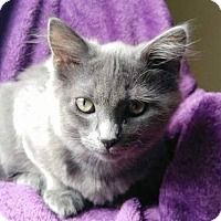 Adopt A Pet :: Torvi - COURTESY LISTING - Cookeville, TN