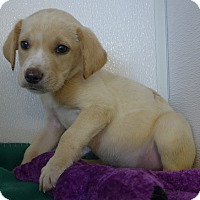Adopt A Pet :: Storm - Manning, SC