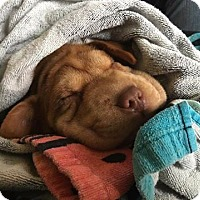 Adopt A Pet :: Mack - ROME, NY