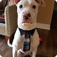 Adopt A Pet :: Bodhi - Alexandria, VA