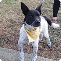 Adopt A Pet :: Annie - Somerset, KY