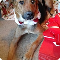 Adopt A Pet :: Alexa - Attalla, AL