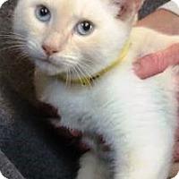 Adopt A Pet :: Neptune - Chattanooga, TN
