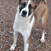 Adopt A Pet :: **HALO - Peralta, NM