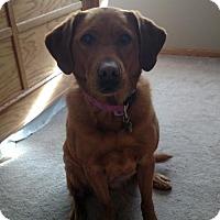 Adopt A Pet :: Zoeyy - Princeton, MN