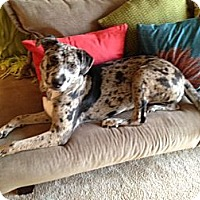 Adopt A Pet :: DOTTIE - Wilmington, NC
