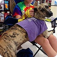 Adopt A Pet :: Tiger - Richmond, VA