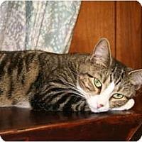 Adopt A Pet :: Bonnie - Bonita Springs, FL
