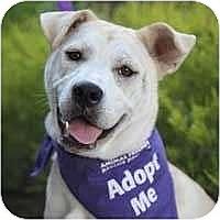 Adopt A Pet :: Aiko - Concord, CA