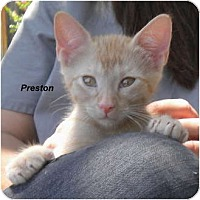 Adopt A Pet :: Preston - Jacksonville, FL