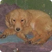 Adopt A Pet :: Gertie - Antioch, IL