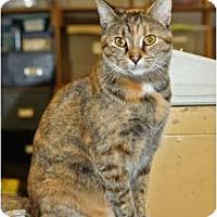 Adopt A Pet :: Prissy - Racine, WI