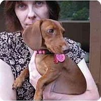 Adopt A Pet :: STARR MARIE - Portland, OR