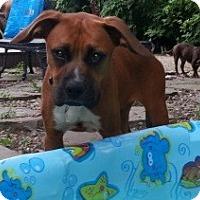 Adopt A Pet :: Mona - Bardonia, NY