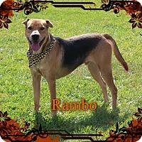 Adopt A Pet :: Rambo - Tampa, FL