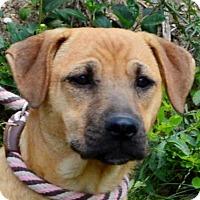 Adopt A Pet :: **STELLA**MEET FEB 13TH! - Mukwonago, WI