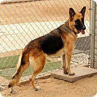 Adopt A Pet :: Amelia2 - Phoenix, AZ