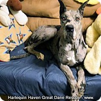 Adopt A Pet :: Jaylee - Bethel, OH