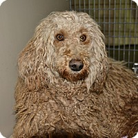 Adopt A Pet :: Rain - Meridian, ID