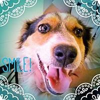 Adopt A Pet :: PIXIE - Chandler, AZ