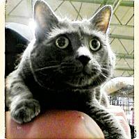 Adopt A Pet :: Olive - Trevose, PA