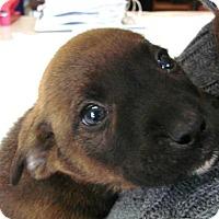 Adopt A Pet :: Leonardo - Erwin, TN