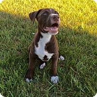 Adopt A Pet :: Lauder - Dayton, OH