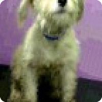 Adopt A Pet :: Ginger-ADOPTION PENDING - Boulder, CO