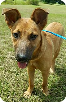 Shepherd (Unknown Type) Mix Dog for adoption in Bowie, Maryland - Keanu